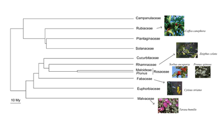 evolutionary systems biology - Plant families presenting S-RNase based GSI. Species under study are shown.